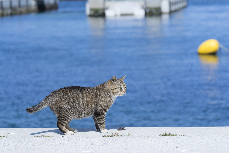 Tashiro cat Island